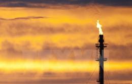 Tập đoàn Total đầu tư 980 triệu USD vào dự án dầu khí tại Bolivia