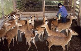 Đề nghị công nhận hươu là giống vật nuôi được kinh doanh