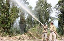 Cà Mau tạm đóng cửa rừng tràm U Minh Hạ