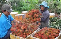 Đồng Nai: Nhiều loại trái cây được giá cao vì vào mùa chậm