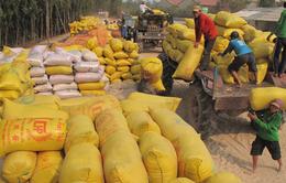 Kiểm tra tiến độ mua tạm trữ 1 triệu tấn quy gạo ở ĐBSCL