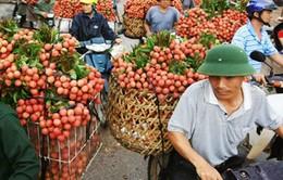 Bắc Giang: Vải thiều cuối vụ rớt giá bất thường