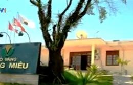 Chính phủ yêu cầu thu thuế của hai công ty vàng Phước Sơn và Bồng Miêu