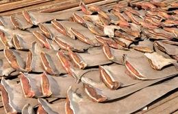 Ecuador thu giữ 200.000 vây cá mập lậu