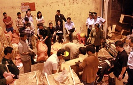 Quảng Ninh bắt vụ vận chuyển ngà voi và vẩy tê tê