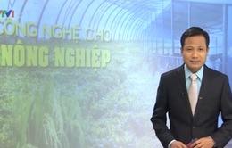 Ùn ứ dưa hấu ở cửa khẩu: Bài toán công nghệ cho nông nghiệp