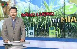 Tạo năng lượng từ cây mía: Việt Nam tận dụng đến đâu?