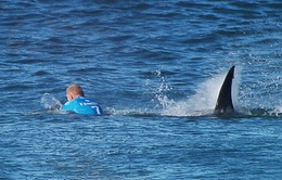 Vận động viên lướt sóng may mắn thoát hiểm trước mũi cá mập