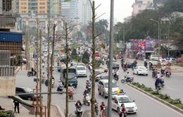 Trồng cây lát hoa thay cây mỡ trên đường Nguyễn Chí Thanh, Hà Nội