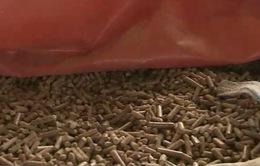 Thiếu nghiên cứu thị trường, DN sản xuất viên gỗ nén lao đao