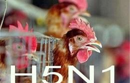 Bà Rịa - Vũng Tàu cảnh báo cúm H5N1 có thể lây lan sang người