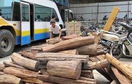 Giấu hơn 2 tấn gỗ trắc trong cốp xe giường nằm vẫn không thoát