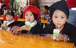 Trẻ mầm non ở Mộc Châu được uống sữa tươi miễn phí mỗi ngày