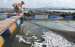 Vũng tàu: Nguyên nhân cá chết là do nước thải ô nhiễm