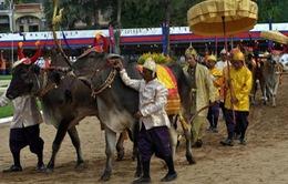 Độc đáo Lễ Vua đi cày ở Campuchia