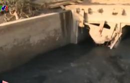 Vũng Tàu: Nhà máy chế biến hải sản xả thải, cá chết hàng loạt