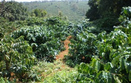 Gia Lai: Gần 400ha cây trồng bị hạn