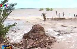 Hàng nghìn ha đất ở Tiền Giang có nguy cơ bị xóa sổ