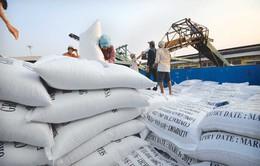 Xuất khẩu gạo có chiều hướng khởi sắc