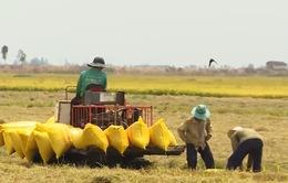 Xuất khẩu gạo khả quan hơn từ quý IV/2015