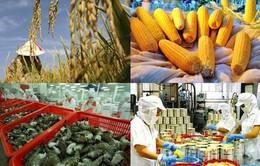 Sụt giảm giá trị nông nghiệp: Nguyên nhân do đâu?