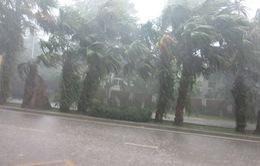 Dự báo thời tiết ngày 10/6: Bắc Bộ tiếp tục có mưa rào và dông trên diện rộng