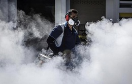 Số ca nhiễm Zika tại Singapore có dấu hiệu giảm