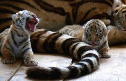 Trung Quốc kêu gọi không dùng động vật quý hiếm trong y học cổ truyền