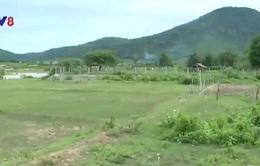 Dai dẳng tình trạng phá rừng làm rẫy sau dự án thủy điện