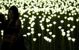 Ngày Valentine: 25.000 bông hồng rực sáng cảng Hong Kong
