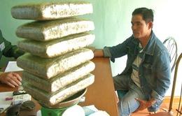 Bắt đối tượng vận chuyển 6kg cần sa ở biên giới Việt Nam - Lào