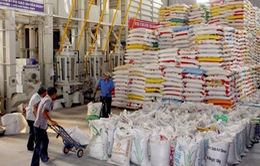 Philippines tạm dừng nhập khẩu gạo