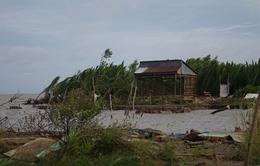 Báo động tình trạng sạt lở ven biển tại Đồng bằng sông Cửu Long