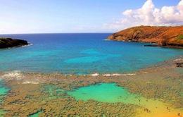 Mỹ xây dựng khu bảo tồn sinh vật biển lớn nhất thế giới
