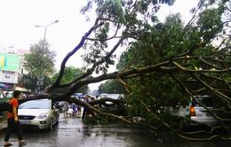 Đầu mùa mưa, cây xanh liên tục gãy đổ tại TP.HCM