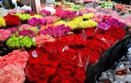 Ghé thăm chợ hoa lớn nhất Bangkok
