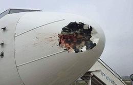 Mũi máy bay thủng lỗ lớn vì chim