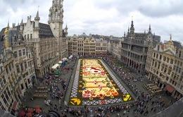Choáng ngợp với 600.000 bông hoa tạo nên thảm hoa khổng lồ ở Bỉ
