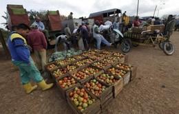 Cuba tiếp tục thắt chặt kiểm soát giá nông sản
