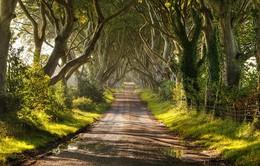 Ngỡ như lạc vào xứ thần tiên với những loài cây đẹp nhất hành tinh
