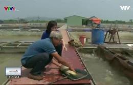 Phát triển nghề nuôi cá lồng - Sinh kế bền vững cho người nông dân