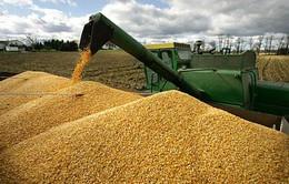 2 tháng đầu năm, Việt Nam chi hơn 300 triệu USD nhập ngô, đậu nành
