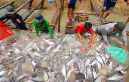 Một năm khó khăn chồng chất với người nuôi cá tra