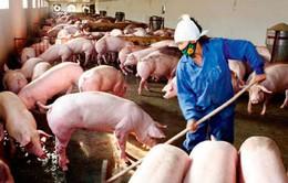 Ô nhiễm trong môi trường chăn nuôi: Câu chuyện không chỉ của người nông dân (17h20, 21/10, VTV1)