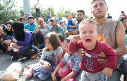 Serbia: Người tị nạn tuyệt thực đòi mở cửa biên giới với Hungary