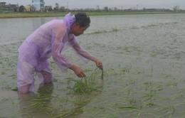Thiệt hại do bão số 1 gây ra hơn 3.400 tỷ đồng