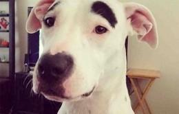 Ngắm những chú chó có bộ lông đặc biệt nhất thế giới