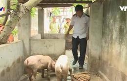"""Xử lý cơ sở """"phù phép"""" lợn bệnh thành lợn mán"""