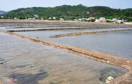 """Rớt giá """"thê thảm"""", diêm dân bỏ hoang ruộng muối Sa Huỳnh"""
