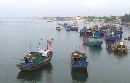 Ngư dân Quảng Trị tổ chức đoàn, đội bám biển sản xuất